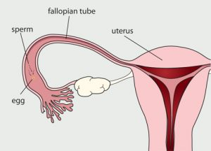 menstrual-cycle-day-14-25
