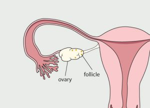 menstrual-cycle-day-7