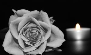 rose-1273727_1280